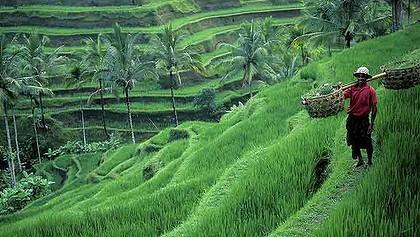 Aktivitas Terkenal Bali Timur