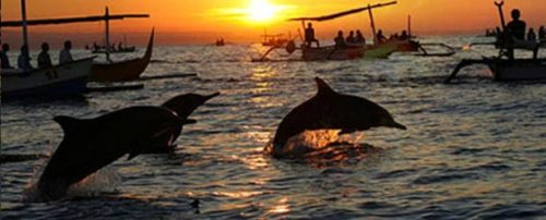 Mengunjungi panati lovina untuk nonton Dolphin